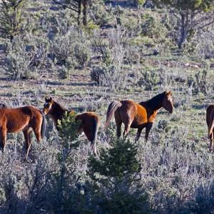 wildhorses0008