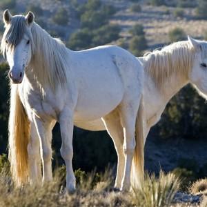 wildhorses0012