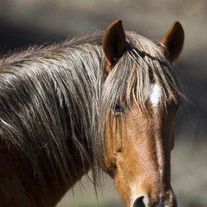 wildhorses0015