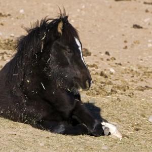 wildhorses0018
