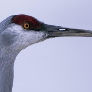 crane0020