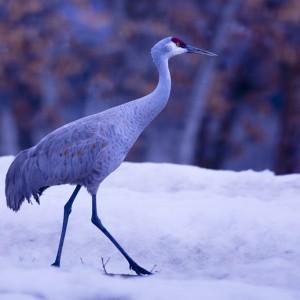 crane0023