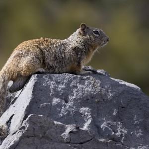 squirrel0022