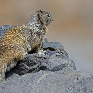 squirrel0023