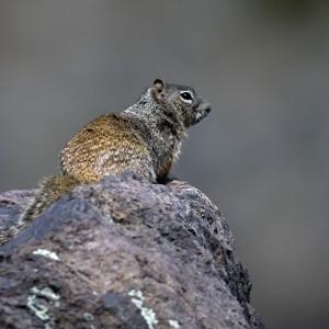 squirrel0024