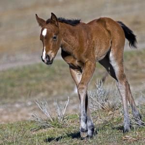 horses0010