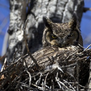 owl0023