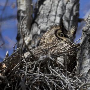 owl0024