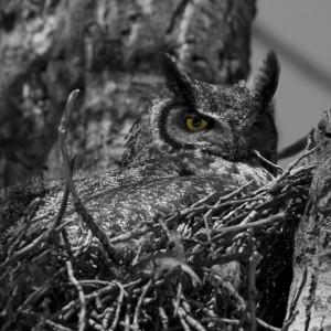 owl0025