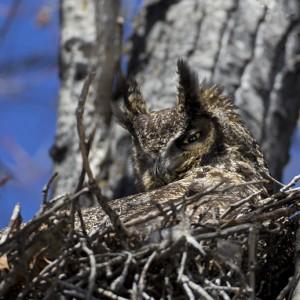 owl0026